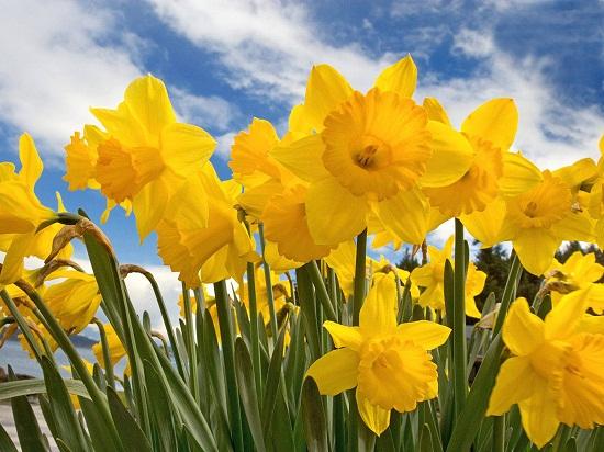 my favourite season spring